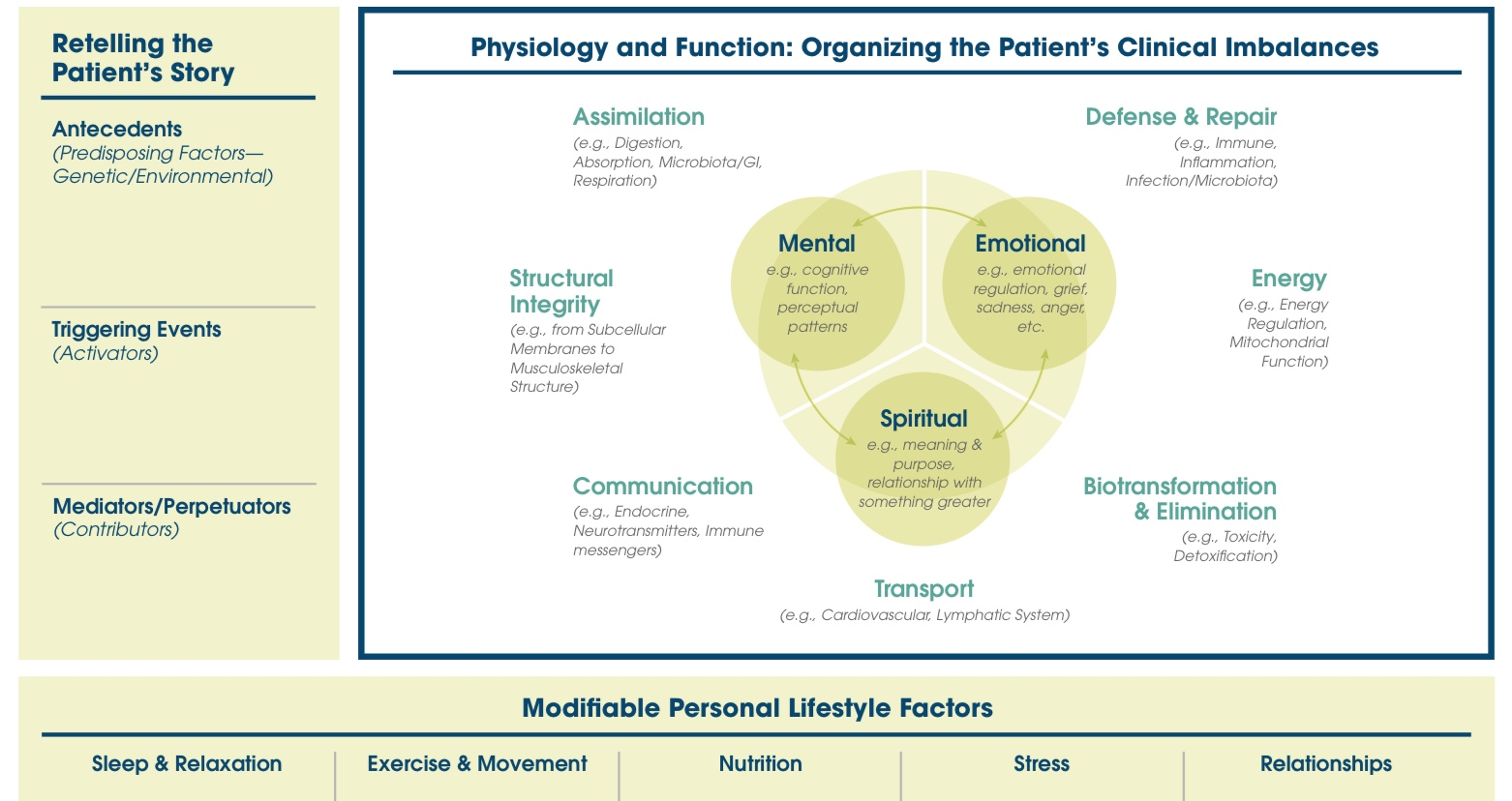 The Functional Medicine model chart
